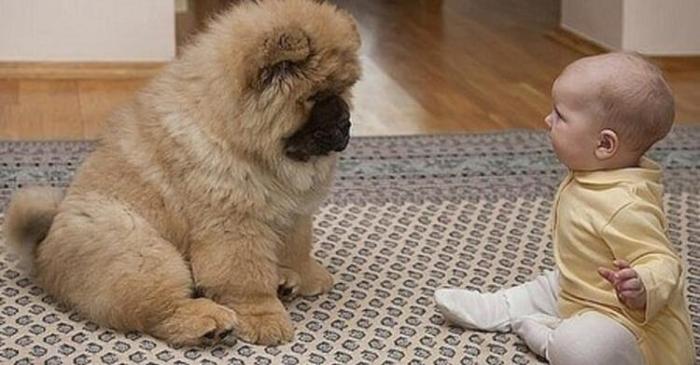 У малыша была парализована одна сторона тела, и тогда врач посоветовал семье купить определённую собаку. Все были в шоке от её действий…