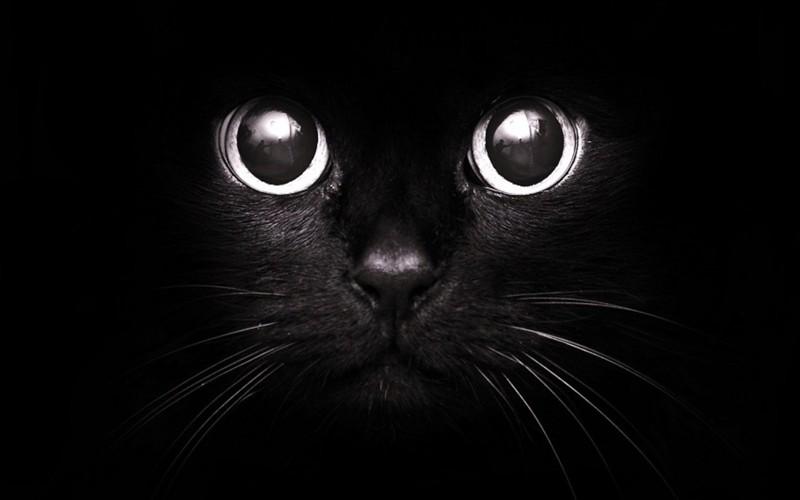 Черный кот: от любви до ненависти обычаи и традиции, приметы, суеверия