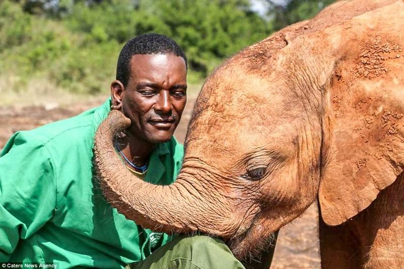 Мбегу целует и обнимает своего спасителя детеныш, животные, история, кения, люди, мир, слониха, спасение