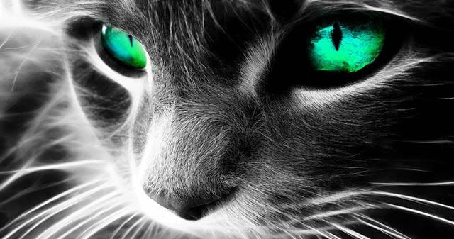 Как кошки защищают вас и ваш…