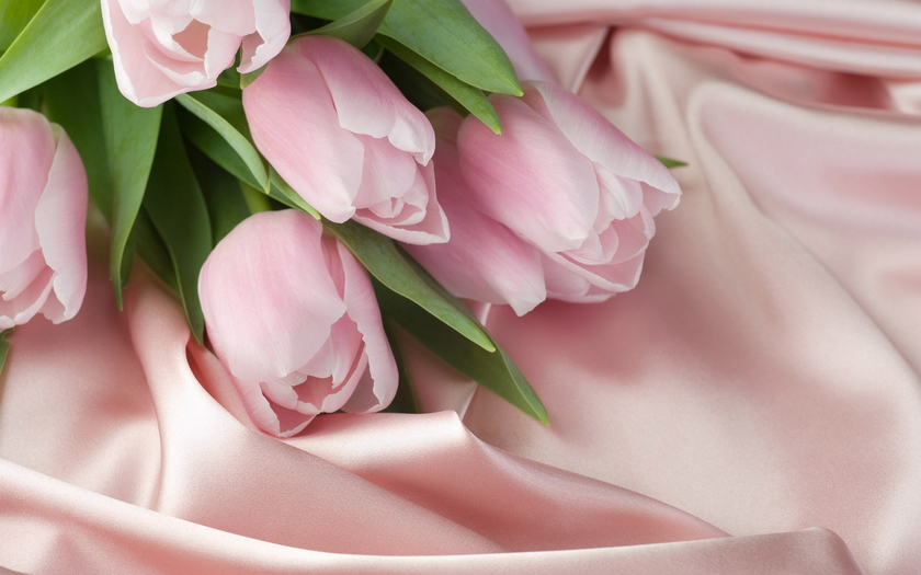 тюльпаны, шелк