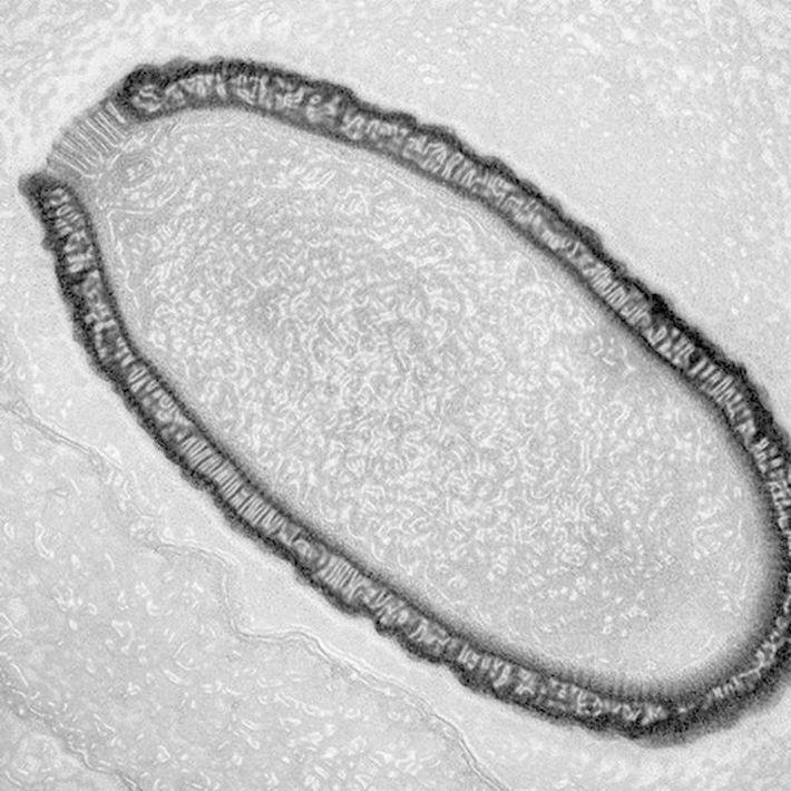 12 страшных находок, обнаруженных во льдах