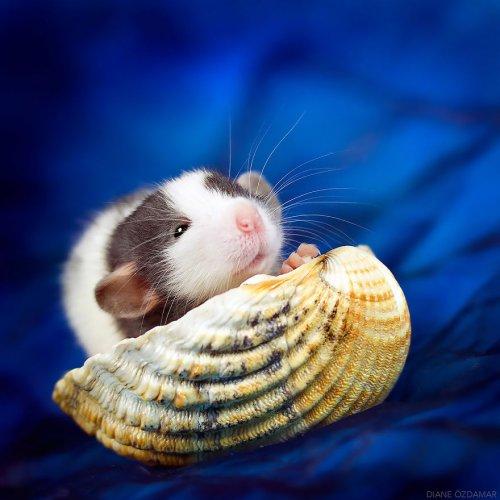 Фотографии прелестных крыс, ломающие стереотипы об этих животных