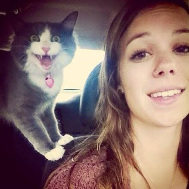 25 веселых кошек, которым надоели ваши глупые селфи