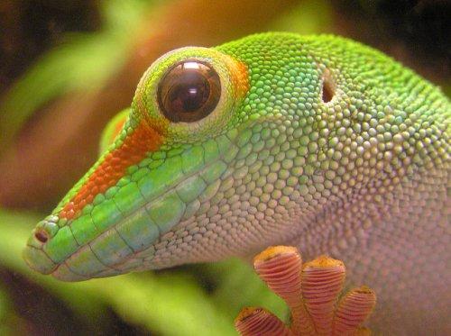 Топ-20: интересные факты про самое многочисленное семейство ящериц – про восхитительных гекконов