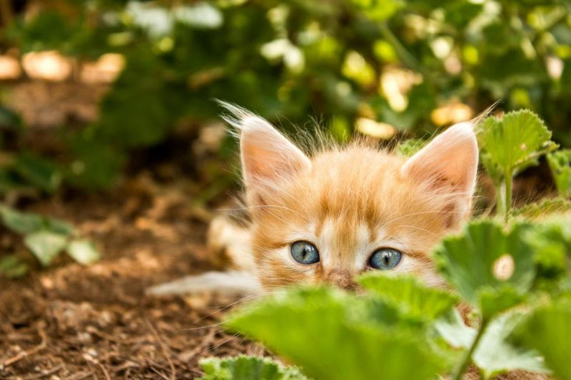 Пожилой старшина нашел котенка на развалинах деревни. Его назвали Рыжиком и взяли с собой…