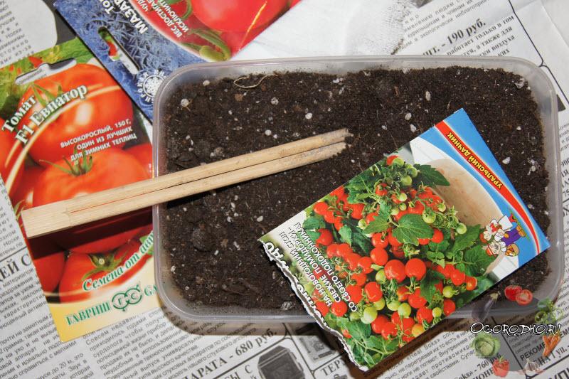 Когда семена на рассаду помидоры 609