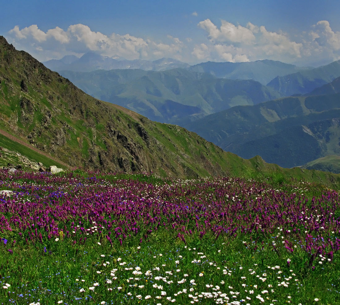 Горные растения : фото и названия горных цветов, растущих на камнях
