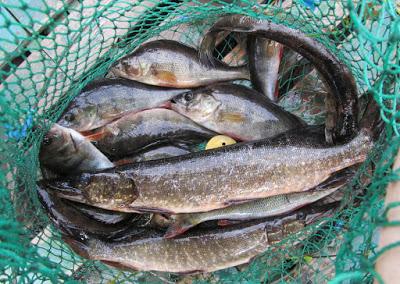 Готовятся изменения в Правила рыболовства по нашему региону