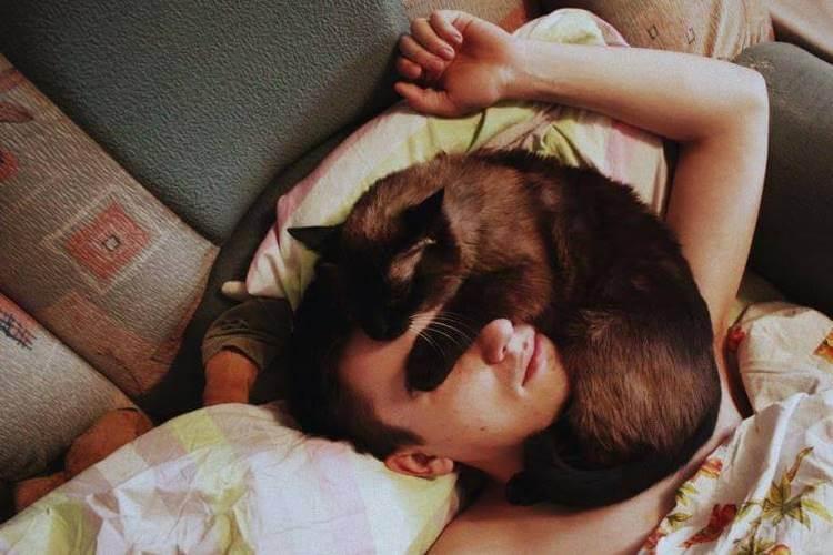 Примеры того, как кошка показывает о присутствии негатива в доме