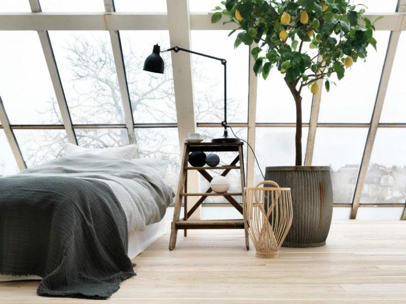Идеи для декора: новый взгляд на комнатные растения