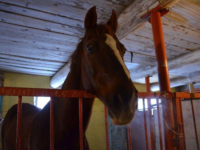 Лошадиная история. Увлекательный ликбез для любителей конного спорта