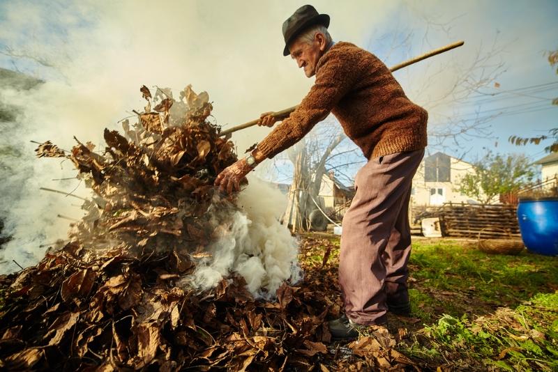 Нужно ли сжигать опавшие листья