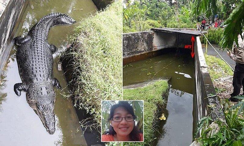 Лабораторный крокодил съел ученую