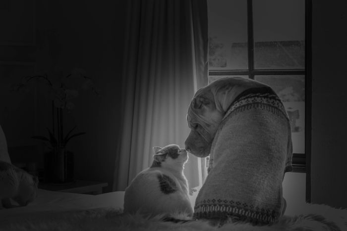 This Shar Pei Is Best Friends With A Cat, And Their Photos Are Just Too Adorable