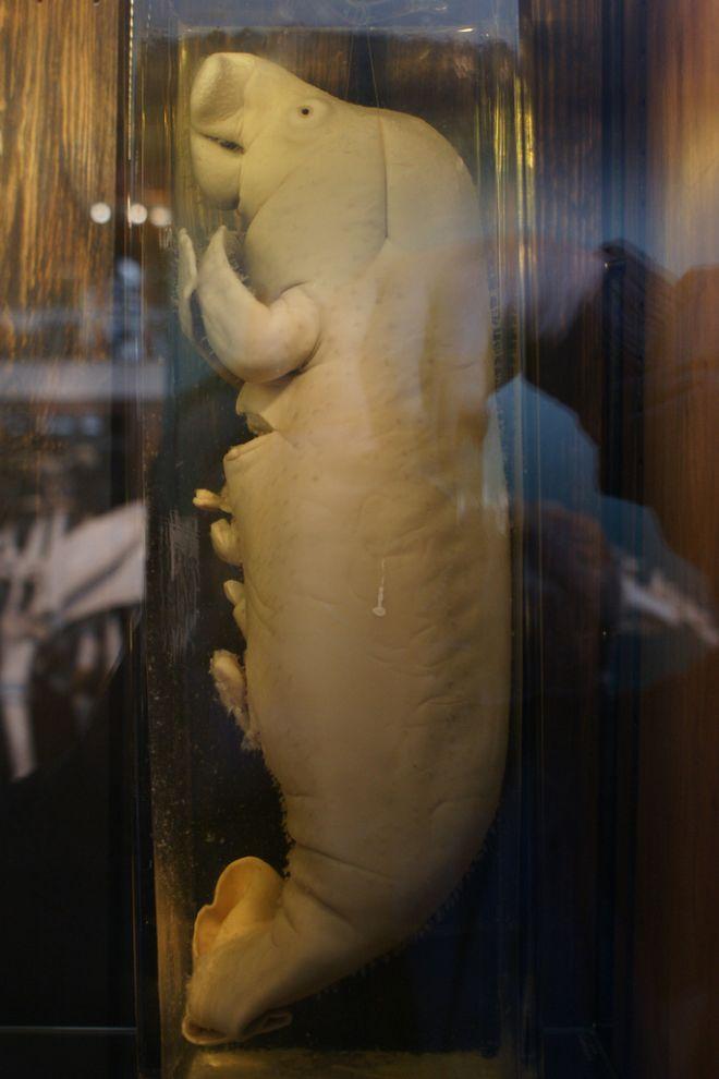 gmoz20 Лондонский музей зоологии и сравнительной анатомии Гранта