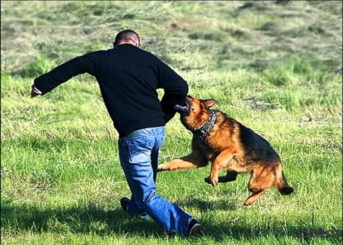 Как отбиться от нападения собаки