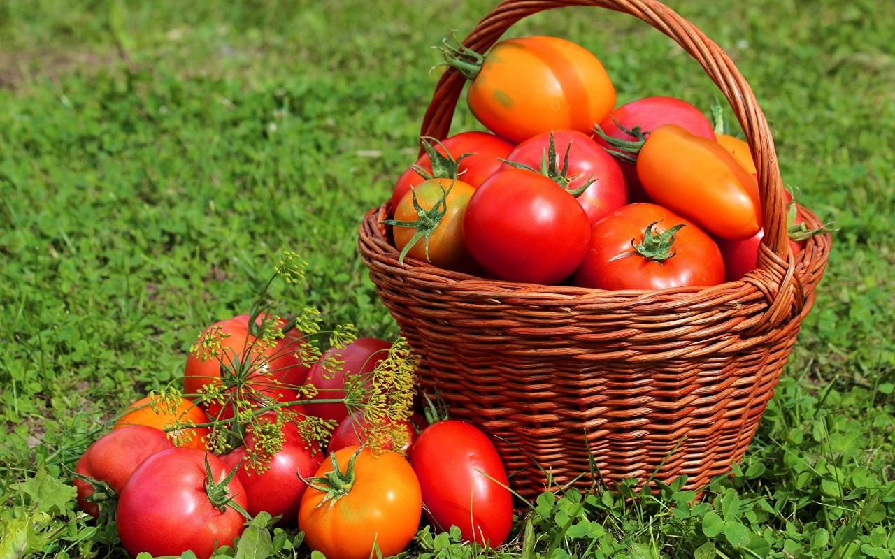 Удвоим урожай томатов. 5 акт…