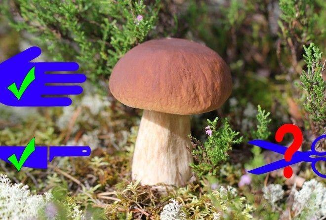 В походе за грибами главное, конечно, не результат, а процесс