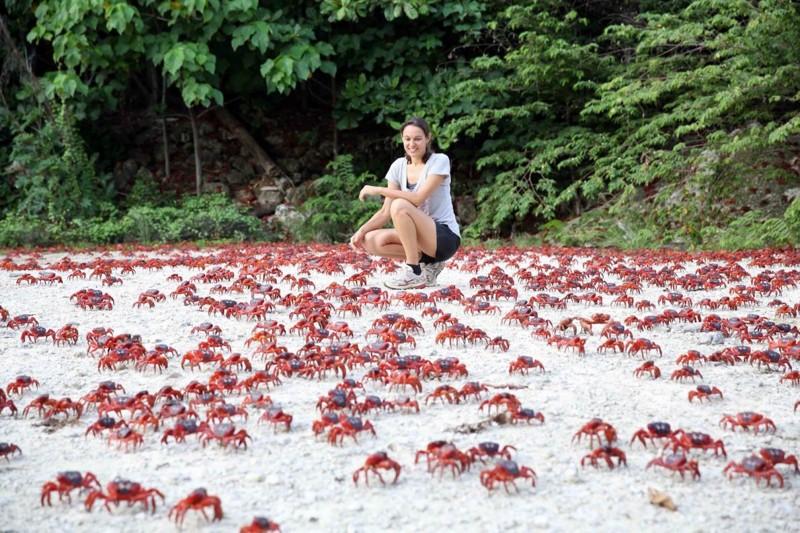 13. Миграция красных крабов жизнь, интересное, красота, мир, природа, феномен, фото, явление