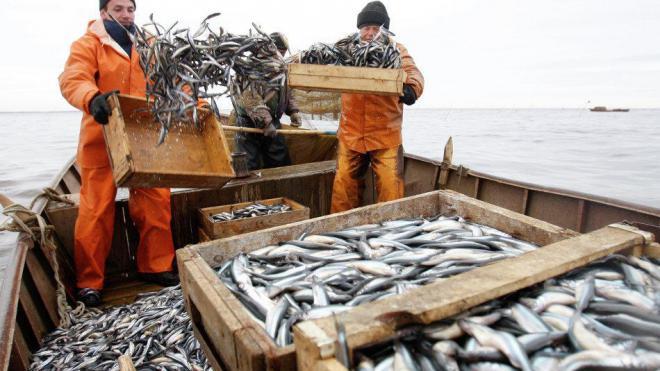 можно ли зарабатывать на рыбалке