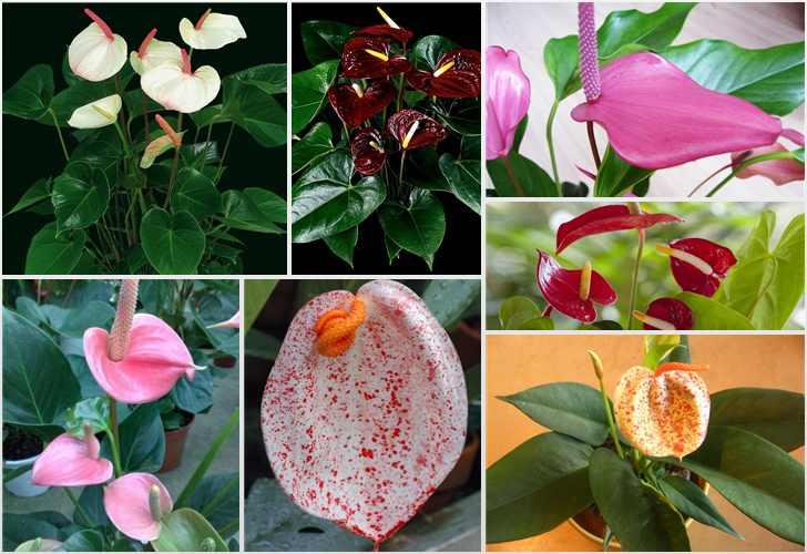 10 комнатных растений, котор…