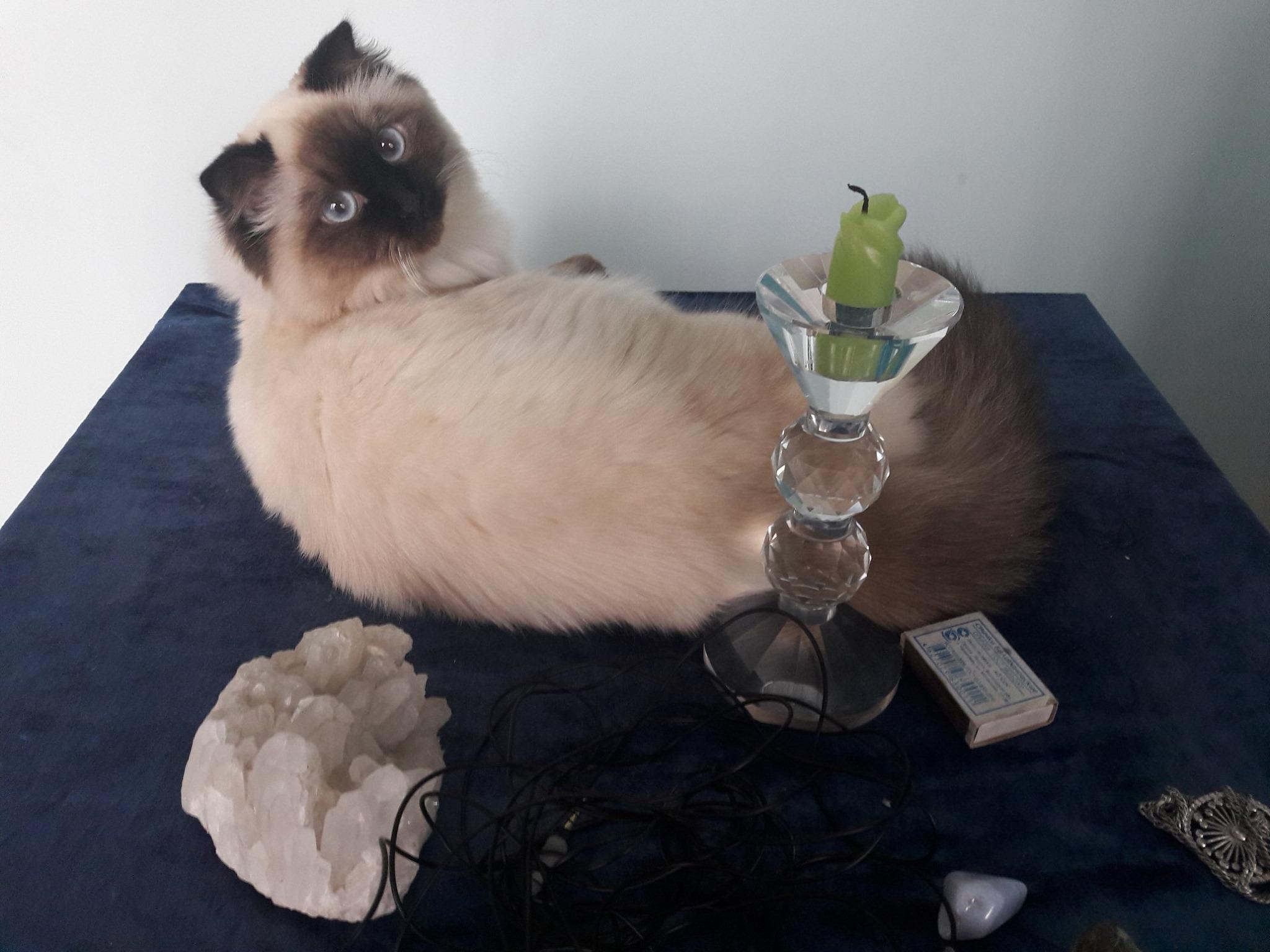 📌 Народные поверья, связанные с кошками 📌