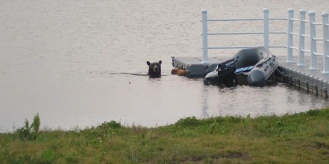 Медведица отомстила рыбакам за медвежонка