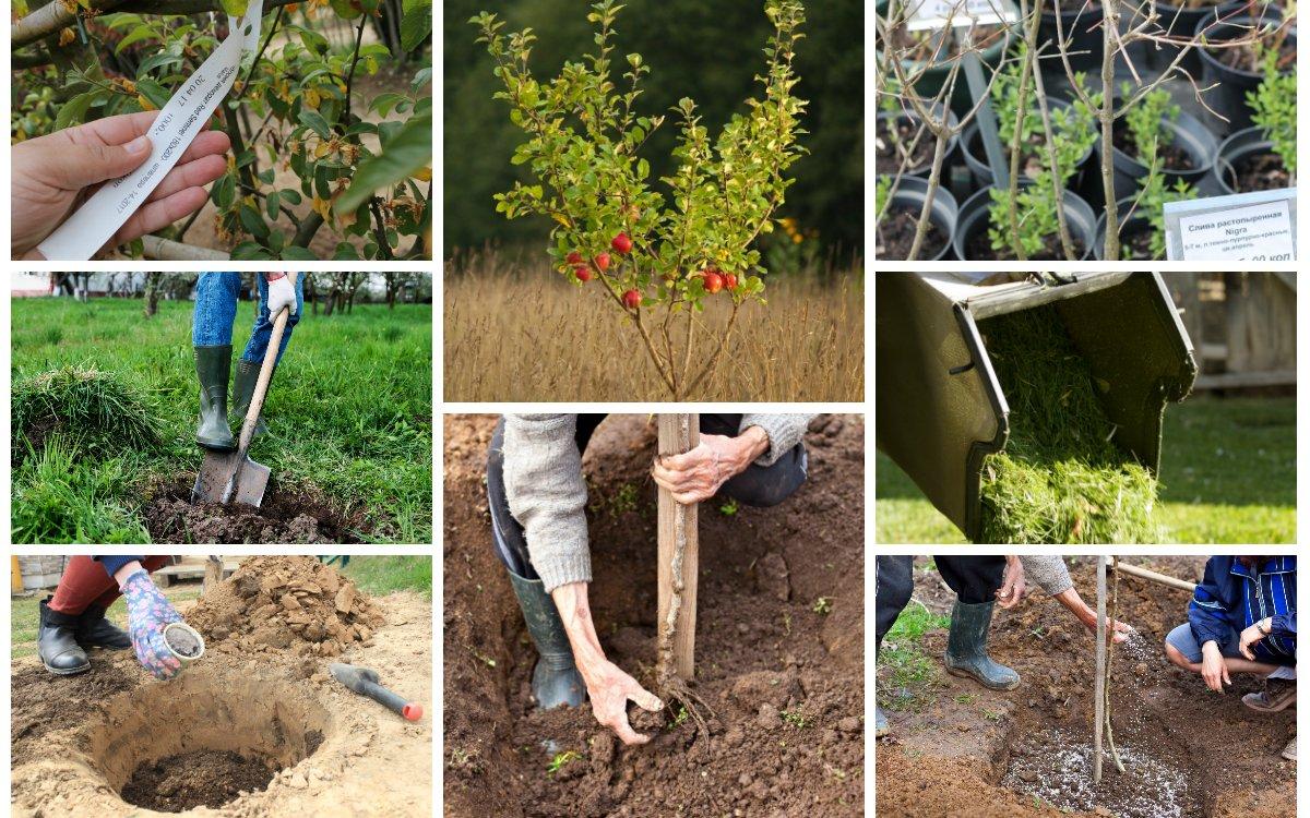Осенью посадить дерев