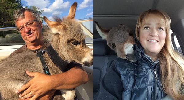 Карликовый ослик Тини Тим полагает что он — большой щенок