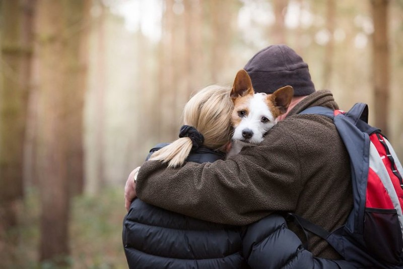 """3 место в категории """"Лучший друг человека"""" - Эннмари Кинг, Великобритания Кеннел клаб, животные, конкурс, лондон, портрет, собаки, фото, фотография года"""