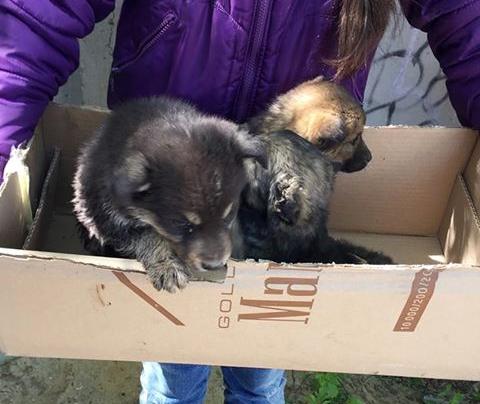 Отзывчивые дети свернули горы ради спасения щенка, упавшего в туалет