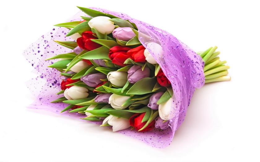 тюльпаны, букет, белые, сиреневые, красные