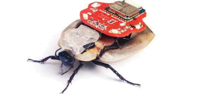 Россияне разработали роботизированного таракана-шпиона