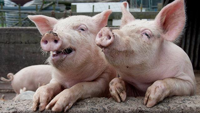 Натуральное свинство: чем грозит России иск Евросоюза в ВТО