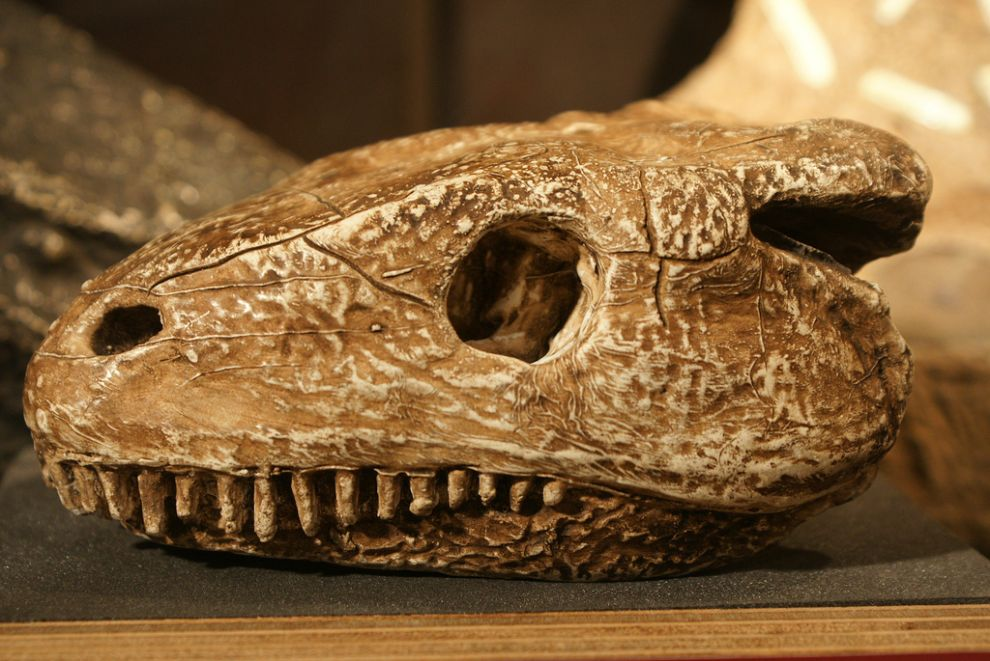 gmoz26 Лондонский музей зоологии и сравнительной анатомии Гранта