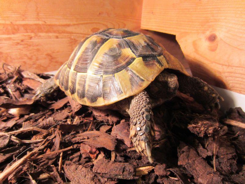 Спячка черепахи в домашних условиях - Eventwed.ru