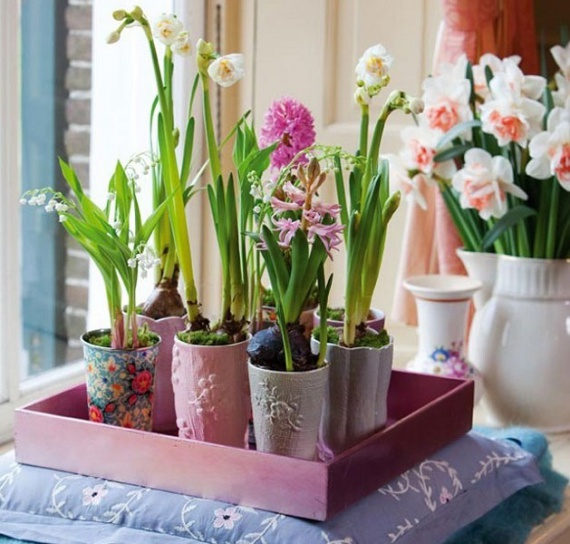Зимняя выгонка луковичных растений дома