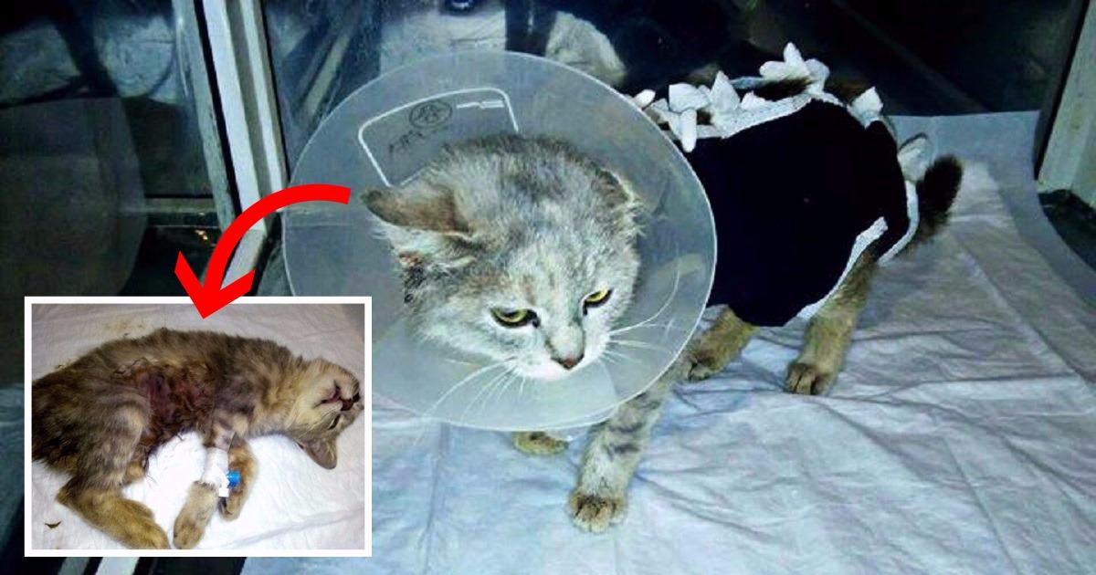 как усыпляют кошек в ветклиниках самое популярные