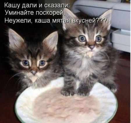 Наши милые кошки.