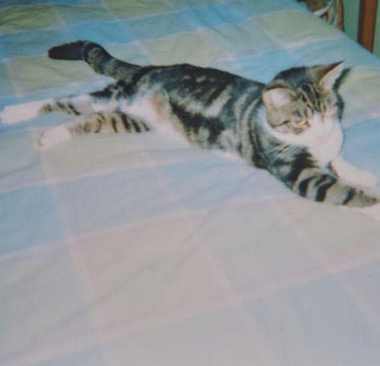 Кошка вернулась домой после 13 лет отсутствия, а встреча с хозяйкой оставит вас в слезах