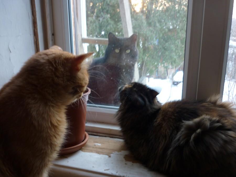 Пускать ли кошку на улицу? Советы ветеринара