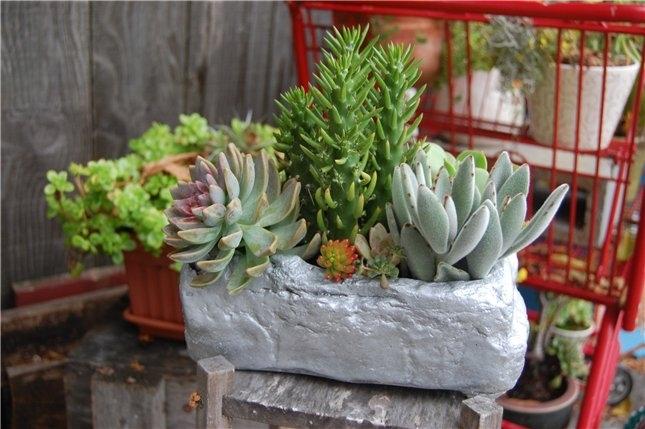 Горшок с мини-растениями