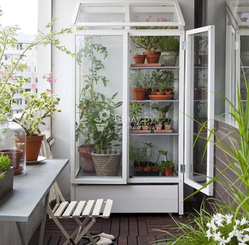 Мини-теплица на балконе для цветочных многолетников