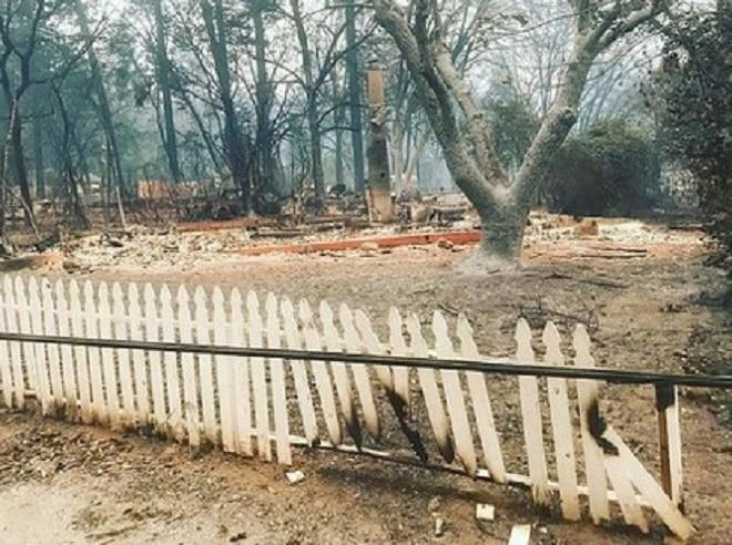 «Силуэт у сгоревшего дома»: людям удалось найти потерянную кошку спустя месяц после пожара