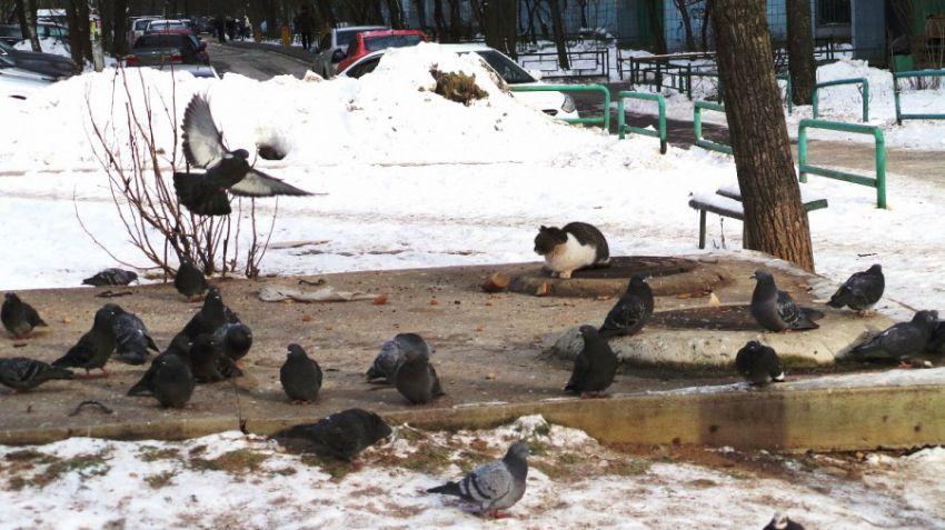 кот, голубь, животные