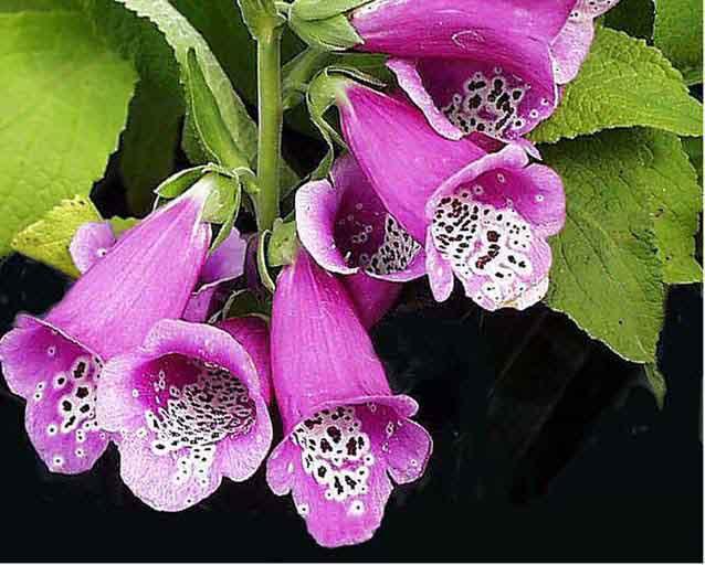 Цветы красивые, но смертельно опасные
