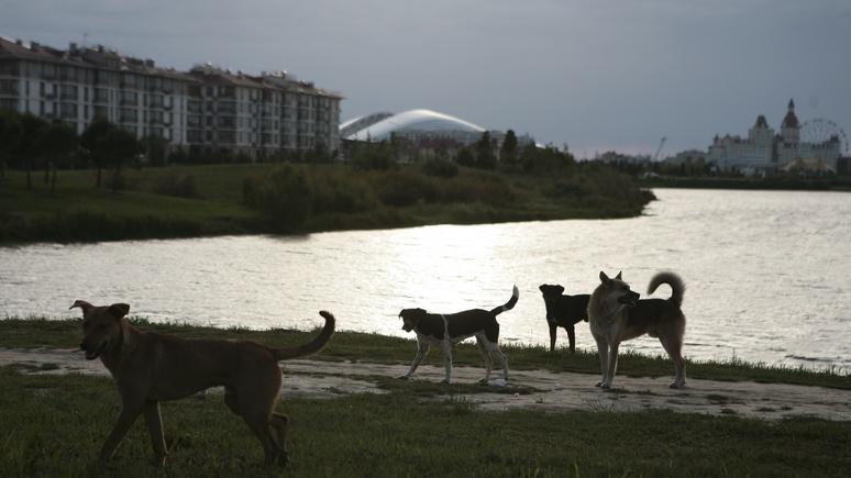 Stern: в Германии разоблачили снимок «убитых перед ЧМ» собак — это фейк из Пакистана