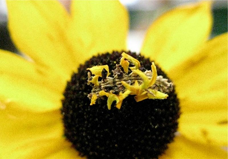 caterpillar08 Чудеса мимикрии: Гусеница цветок