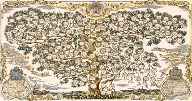Генеалогическое древо – что это такое, зачем его составлять, существующие виды